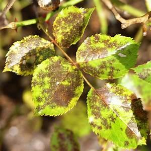 11 Pflanzen Methode : sternru tau behandeln pflanzen f r nassen boden ~ Lizthompson.info Haus und Dekorationen