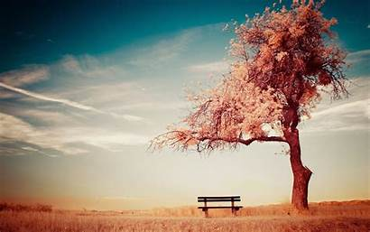 Alone Tree Wallpapers Bench Wallpaperaccess Backgrounds