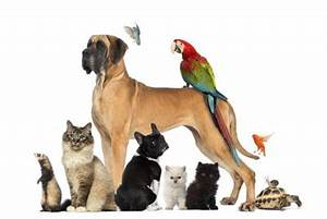 Site D Annonces Gratuites Entre Particuliers : site gratuit de garde d 39 animaux entre particuliers mr animo ~ Gottalentnigeria.com Avis de Voitures