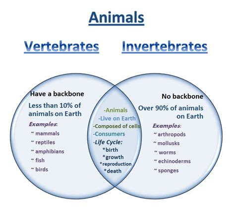 learning ideas grades k 8 venn diagram vertebrates