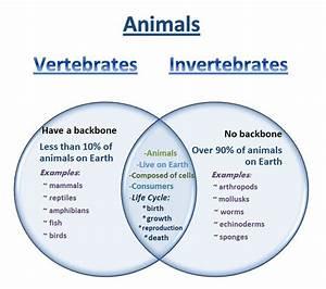 Learning Ideas - Grades K-8  Venn Diagram