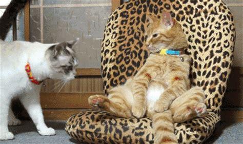 le canapé gif sur yvette bagare petit photos de chats