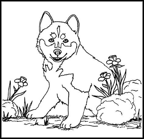 Honden Kleurplaten Husky by Kleurplaat Husky Hond Siberian Spirit Siberische Husky