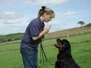 become a dog trainer in an hour owners beware With become a dog trainer