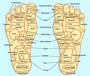 pressure points on the feet   health and wellness ...