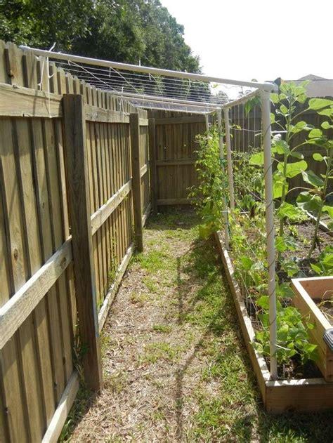 pvc trellis next yrs garden garden ideas