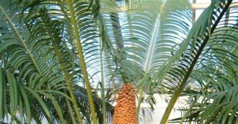 tumbuhan berbiji terbuka gymnospermae ciri ciri