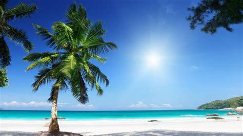 palm tree  tropical beach  ultra fond decran hd