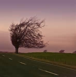 home and interiors scotland windy tree scotland tenenbaum