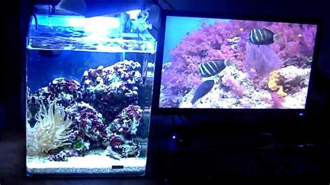 aquarium nano r 233 cifal 30 litres 720 p hd