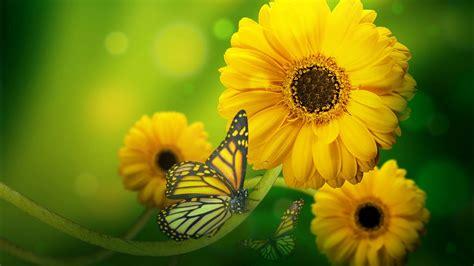 butterfly  yellow flowers hd wallpaper