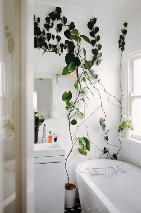 bring climbing vines indoor    home