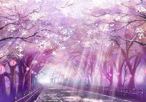 flor de cerezo rayos de sol morado flor de cerezo