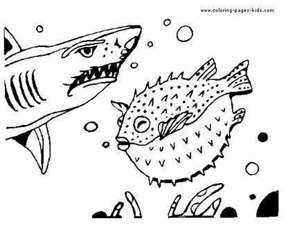 Coloring Shark Pages Sharks Printable Animal Blowfish