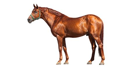 horse quiz   create horse quizzes trivia proprofs