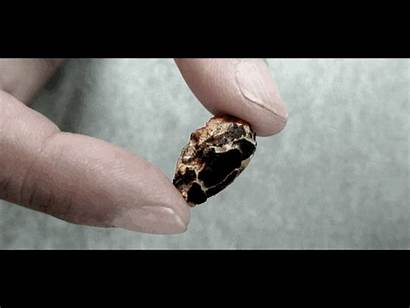 Embryo Lizard Inside Fossil Egg Embryos Discovered