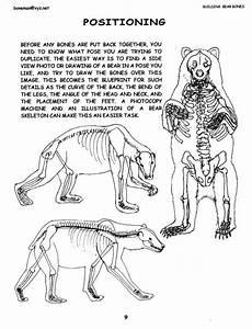 Polar Bear Anatomy And Physiology