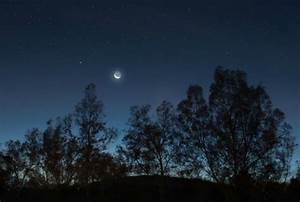 Trees 'Sleep' at Night Too, Study Finds | Mental Floss