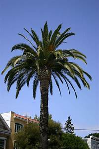 Palm Tree Pictures ~ Hits All