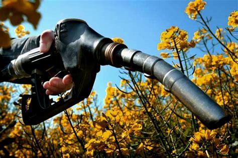 Производство биотоплива из водорослей опилок и рапса
