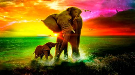 Animated Elephant Wallpaper - elephant wallpapers 1280x720 volganga