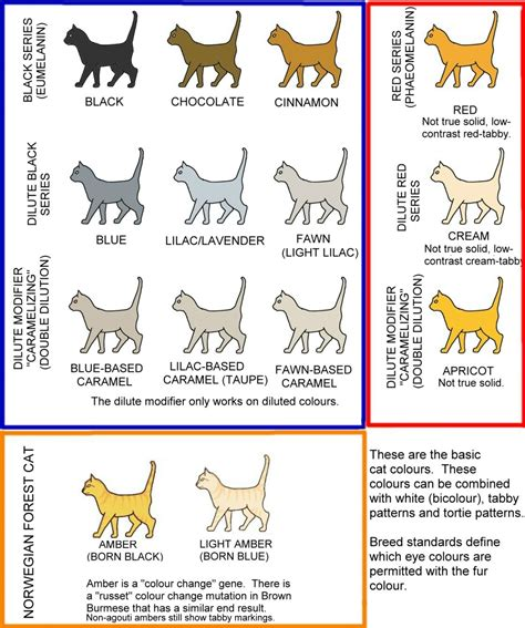 cat colors guide to cat coat colors solids meow barkers