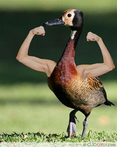 birds  human arms barnorama