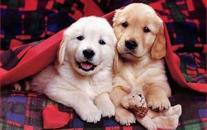 dogs and puppies, funny puppies, puppies world, puppy ...