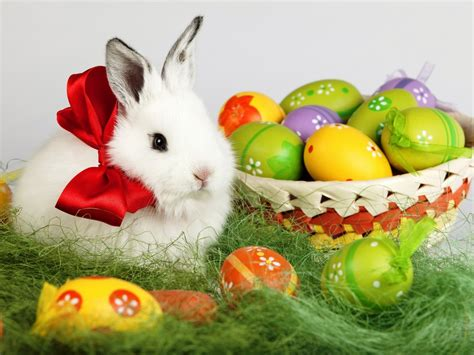 easter bunny wallpapers backgrounds images