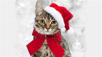Christmas Cat Santa Hat Tree Cats Background