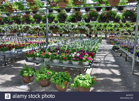 Blumen Und Pflanzen Zum Verkauf An Einen Garten-shop Im