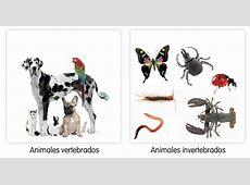 Blog de Ana Bastida 2º ANIMALES VERTEBRADOS E INVERTEBRADOS