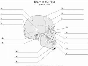 Skull In Waters View For Facial Bones