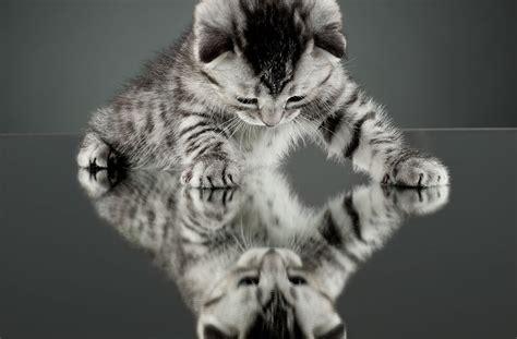 telecharger jeux de chaton