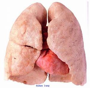 Care and Cure: Lungs