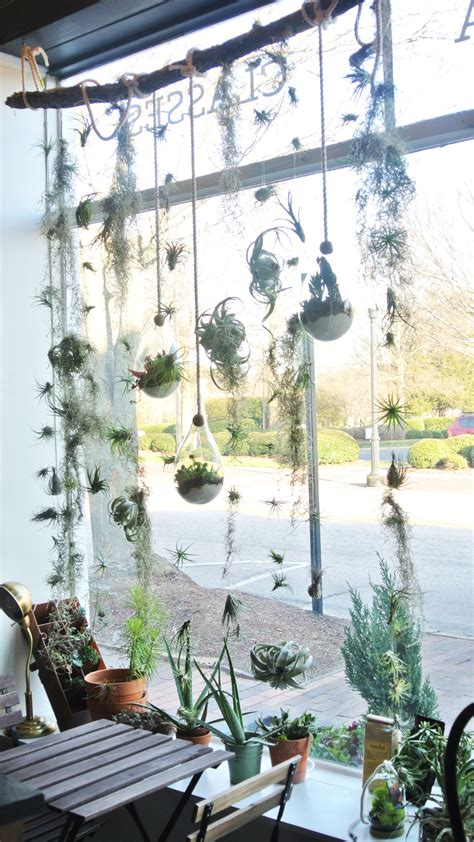 Plant Window by Image Result For Air Plant Window Display Vertical