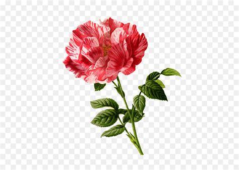 koleksi background bunga transparan hd