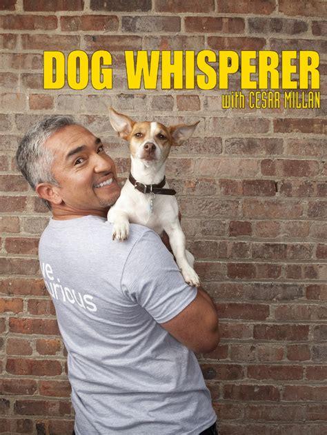 dog whisperer tv show news  full episodes