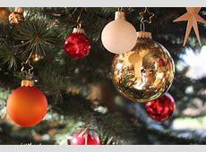 Kostenlose foto Baum, Ast, Star, Urlaub, Weihnachten