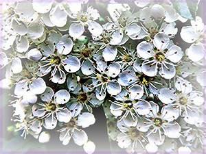 Weiß Blühende Sträucher : bl hende hecke bild foto von fritzla aus str ucher ~ Michelbontemps.com Haus und Dekorationen