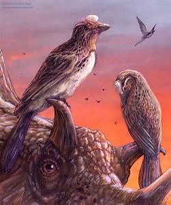 Rare fossil bird deepens mystery of avian extinctions  Bird