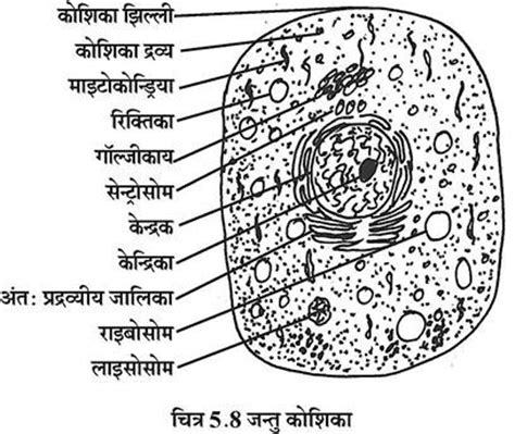 cell structure  function  diagram hindi biology
