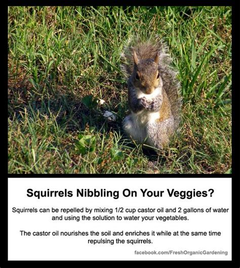 keeping squirrels away from bulbs 17 best images about fresh organic gardening tips on pinterest gardens medicinal plants and
