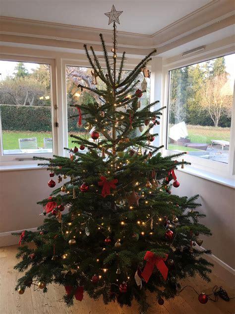 weihnachtsbaum hamburg schmueckt ihren tannenbaum mit