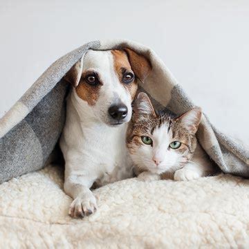 pueden convivir los perros  los gatos foto