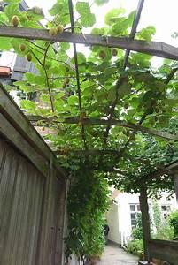 Kletterpflanzen Für Pergola : die kiwi als spalierobst f r haus und garten ~ Markanthonyermac.com Haus und Dekorationen