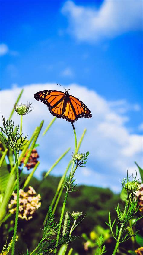 Download Wallpaper 1440x2560 Monarch Butterfly Butterfly