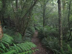 File Temperate Rainforest In Great Otway National Park