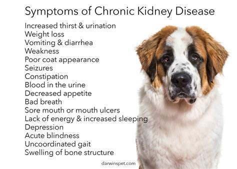 dog food  kidney disease guide darwins pet