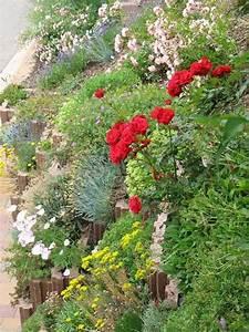 Steilen Hang Bepflanzen : ideen f r steile b schung mein sch ner garten forum ~ Lizthompson.info Haus und Dekorationen